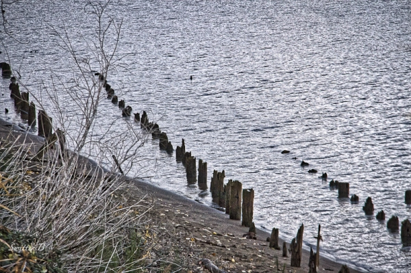 old pilings-Linnton-river-SwittersB