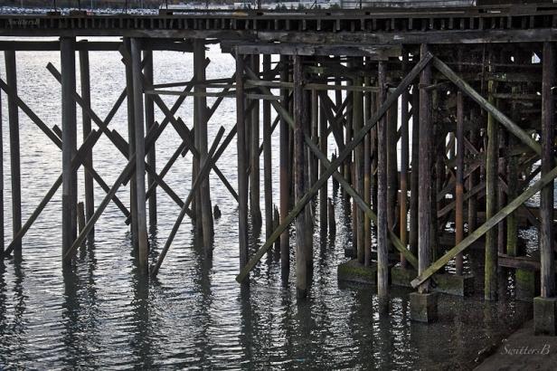 pilings-Linnton-Willamette R.-Oregon-SwittersB