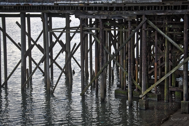 pilings-Linnton-Willamette R.-Oregon-SwittersB