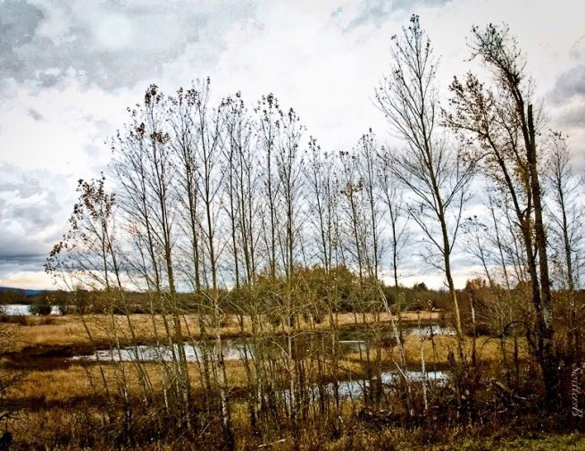 Sauvie Island-wetland-trees-SwittersB