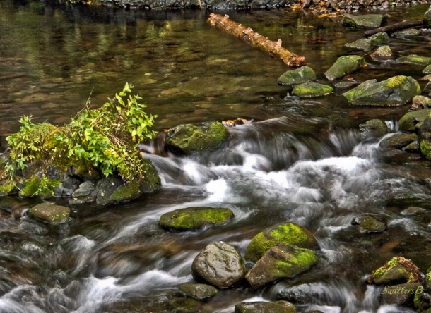 small stream-moss-Gorge-SwittersB