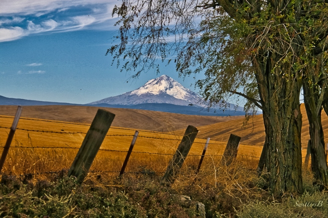 SwittersB-Mt; Hood-fence line_HDR-2