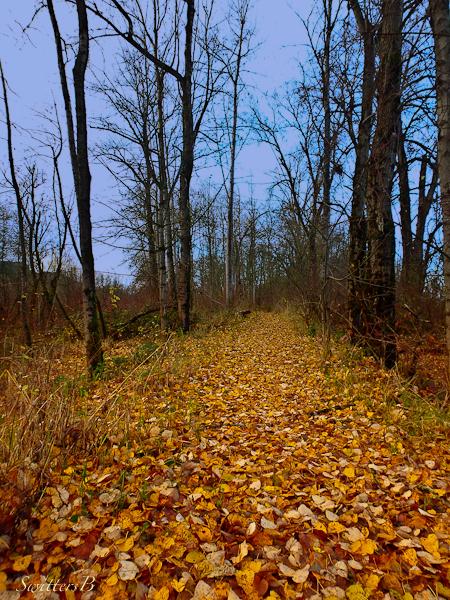 woods, trail, unknown, SwittersB