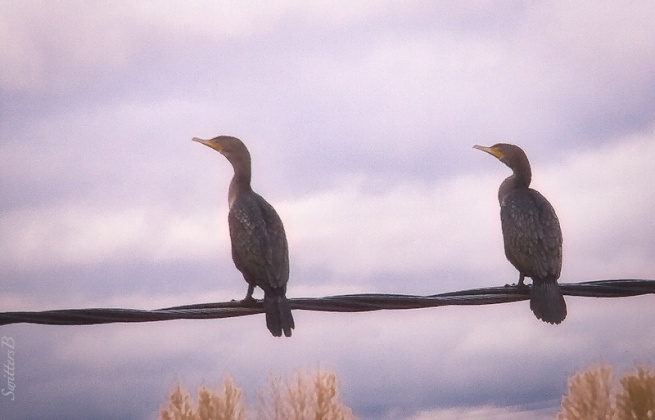 two birds-wire-Linnton-SwittersB