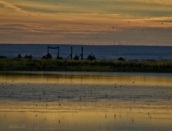 birds feeding-hatch-lake-Oregon-SwittersB