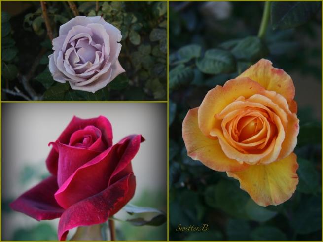 Desert Roses Collage-Rancho Mirage-flowers-SwittersB