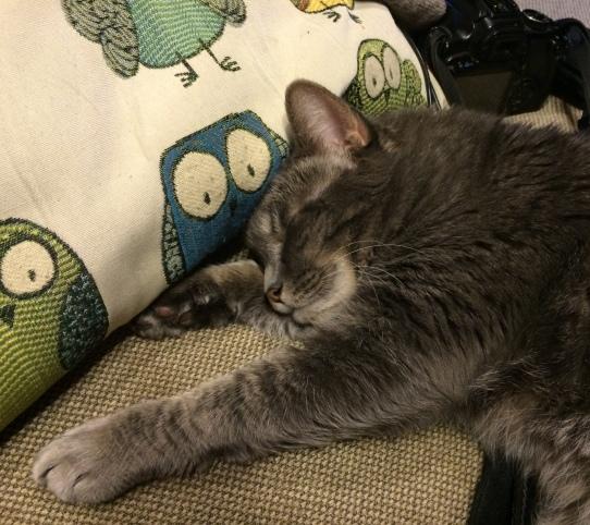 Penny the Cat-Owls-Cat-sleep-SwittersB
