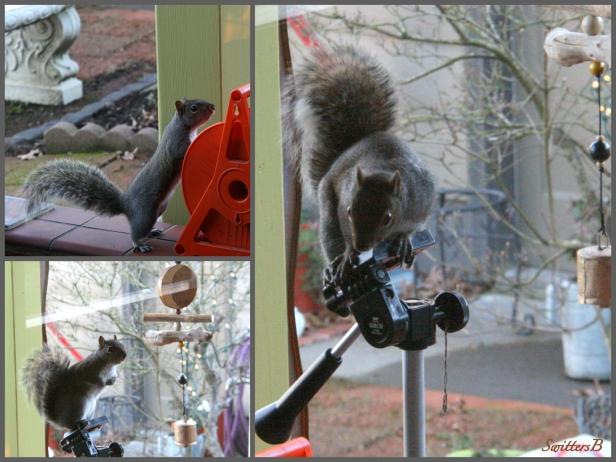 Squirrel-Patio-Tripod-SwittersB