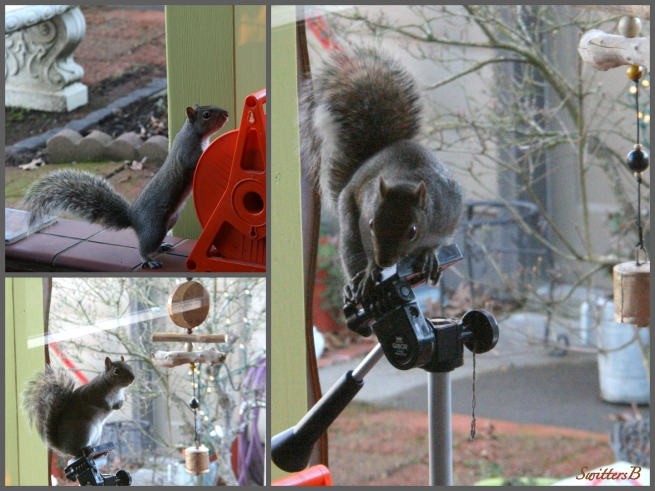 Squirrel-Patio-Tripod-SwittersB