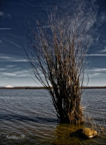 brush-water-Sturgeon Lake-SwittersB