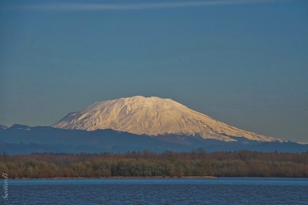 Mt. St. Helens-Sturgeon Lake-Sauvie Island-SwittersB