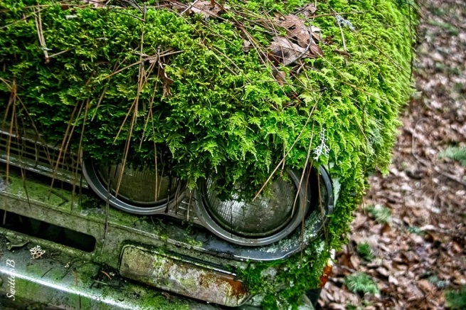 old Datsun-moss-headlights-forgotten-SwittersB