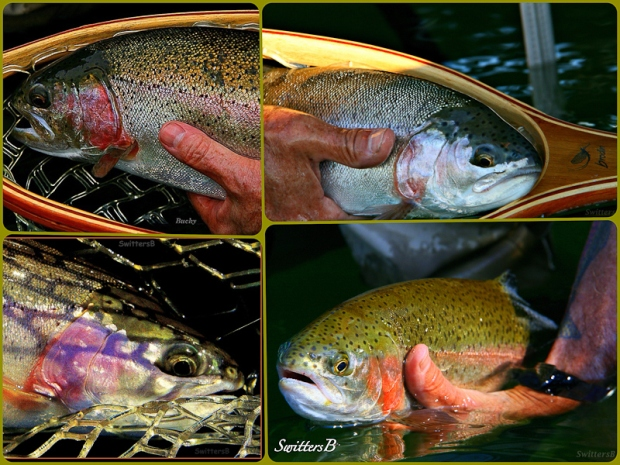 Trout Collage-Fly Fishing-Oregon-SwittersB