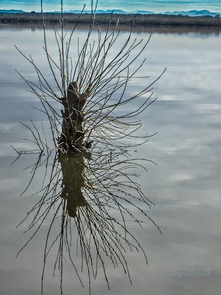 SwittersB-Sturgeon Lake-Oregon