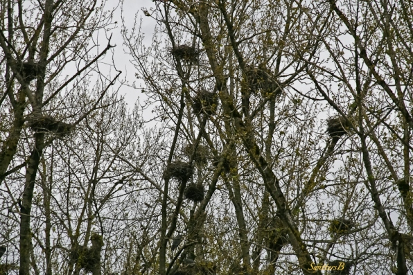 Eagles Nests-Close Up-Trees-SwittersB