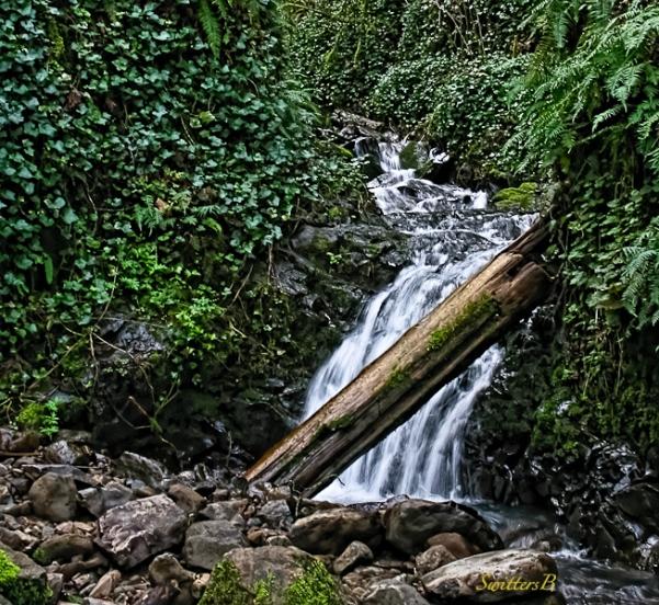 falls and log-SwittersB-Newton Creek