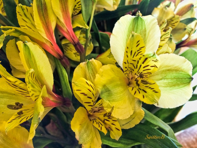 flowers-Spring-SwittersB