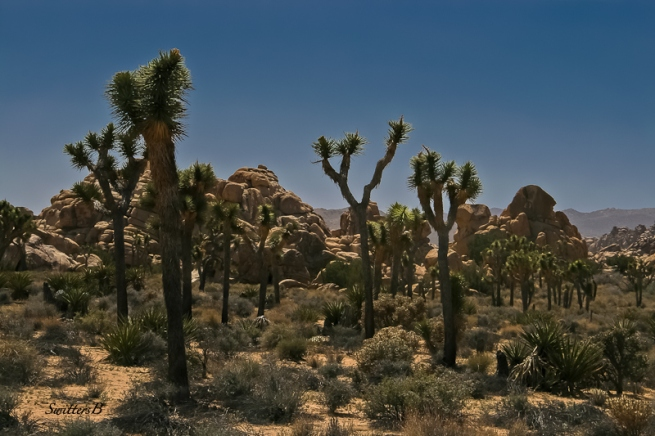 Joshua Tree-rock formations-desert-SwittersB