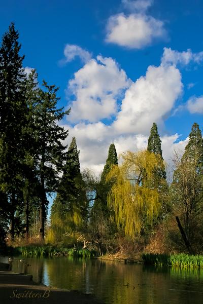 pond-garden-Springtime-SwittersB