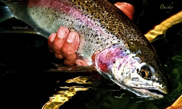 trout at sunset-Oregon-Bucky-SwittersB-2