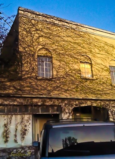 vines-windows-Portland-dusk-SwittersB