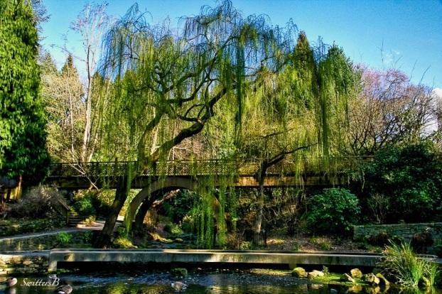 willow-garden-bridge-SwittersB