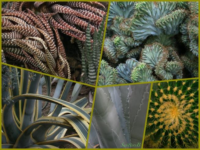 Cactus-Desert Designs-plants-SwittersB.jpg