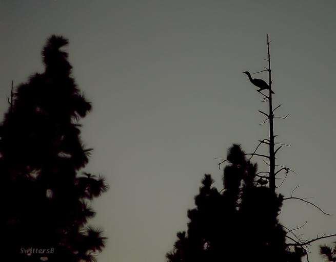 crane-tree-perch-SwittersB