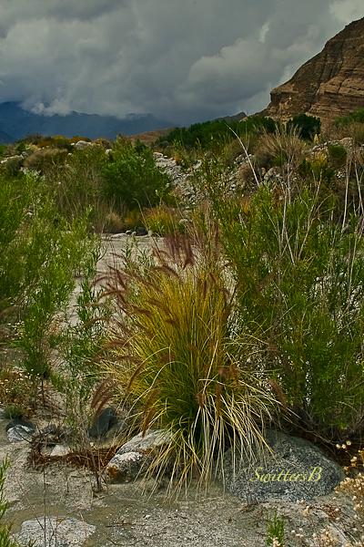 desert bush-desert-Whitewater Canyon-SwittersB