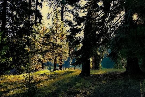 Ochoco Mtns-sunrise-SwittersB