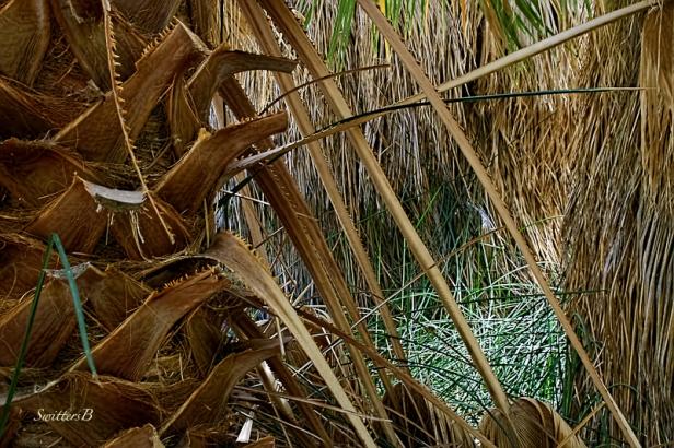 palm tree-base-desert-SwittersB