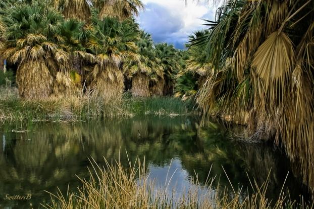 Simone Pond-McCallum Grove-Desert-SwittersB