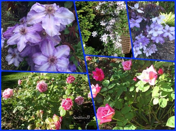 flowers-blooms-backyard-SwittersB