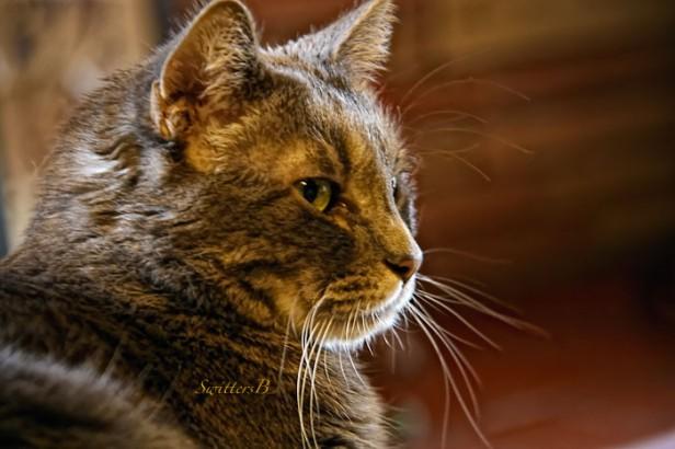 penny the cat-pet-SwittersB