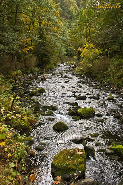 Tanner Creek-Gorge-Oregon-SwittersB