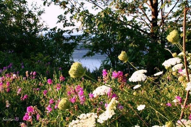 gorge-flowers-yarrow-sweet-peas-nature-swittersb-photography