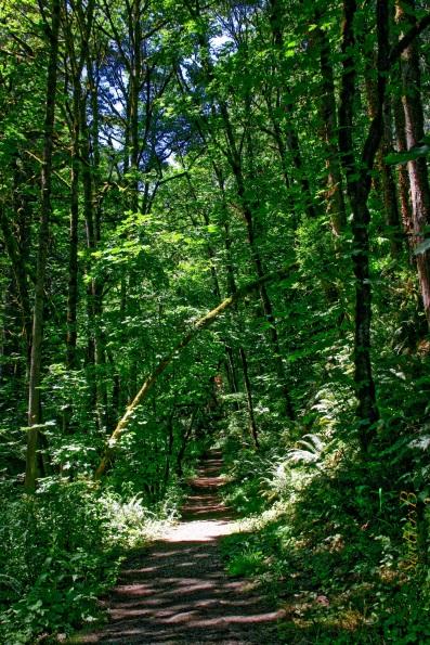 linnton trailhead-Portland-SwittersB