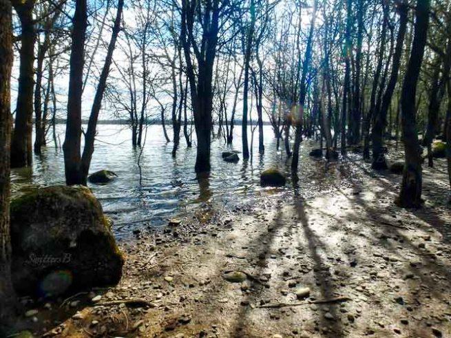 sturgeon lake-shadows-SwittersB-2