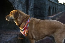 Desirae-Dog-Rocky Butte-SwittersB-2