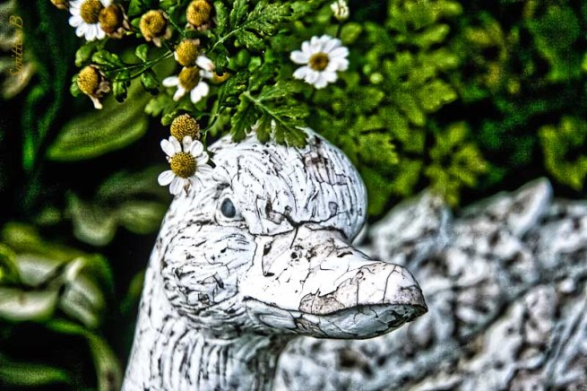goose-flowers-yard art-peeling-SwittersB-2