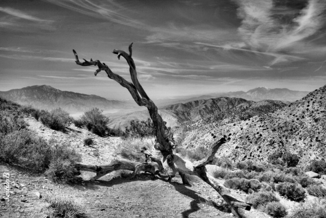 Keys View-Snag-Desert-SwittersB