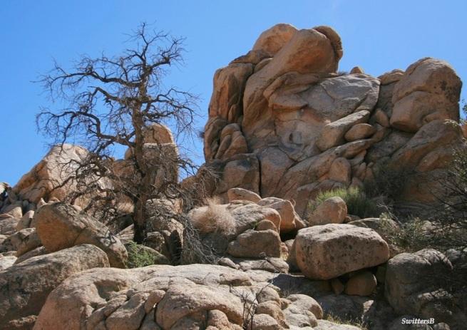 Rocks-snag-desert-SwittersB