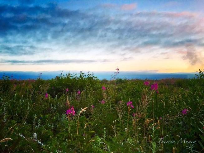 wild flowers-olympic penninsula-Theresa Muncy-SwittersB2