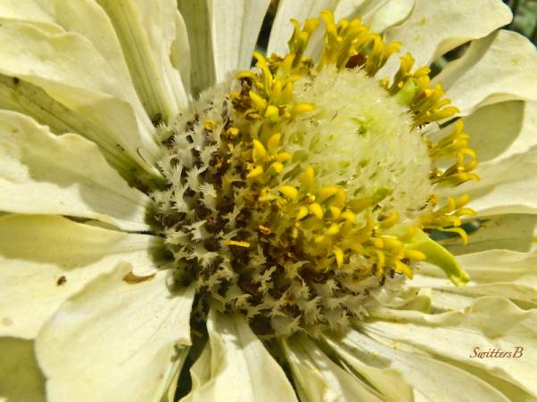 flower, stamens, macro, SwittersB