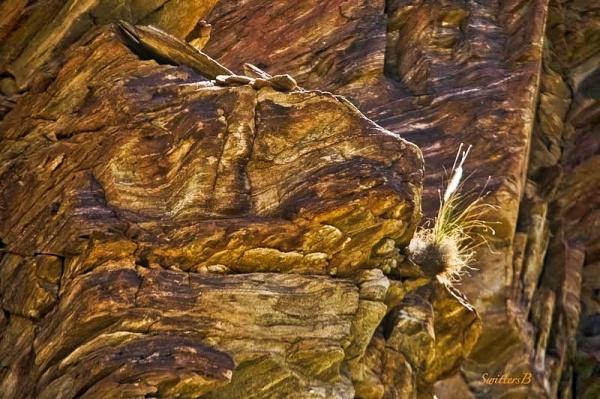 grass-cliff-rock face-desert-SwittersB