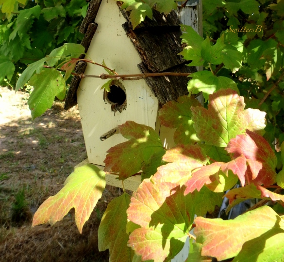 birdhouse-grape leaves-birds-SwittersB