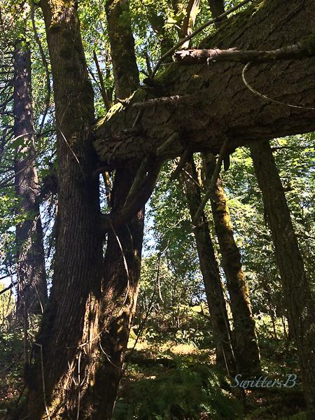 crux-tree-down-nature-swittersb-3
