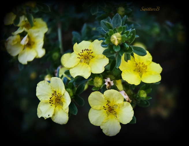 faint-garden-yellow-flowers-swittersb