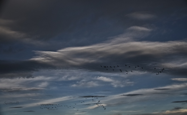 geese-clouds-oregon-southbound-swittersb