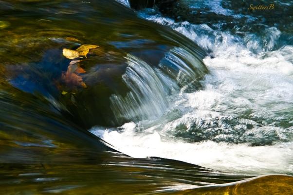 leaves-beneath-surface-river-rapids-oregon-swittersb